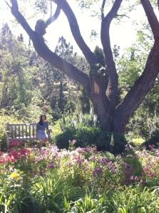 uc riverside botanical garden  alstroemeria flowers