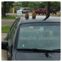 My Swedish Hasbeens